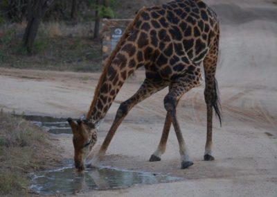 Kapama Kruger South Africa