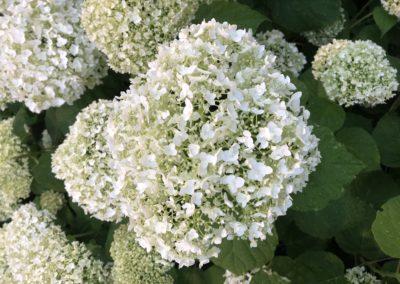 Flowers of Pointe du Hoc