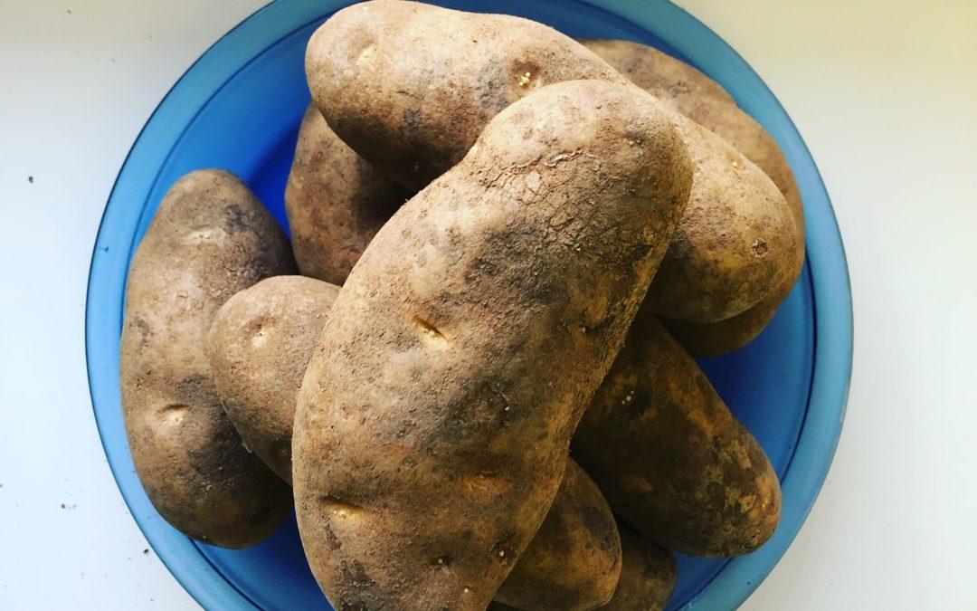 Potato – Day 57 of 365